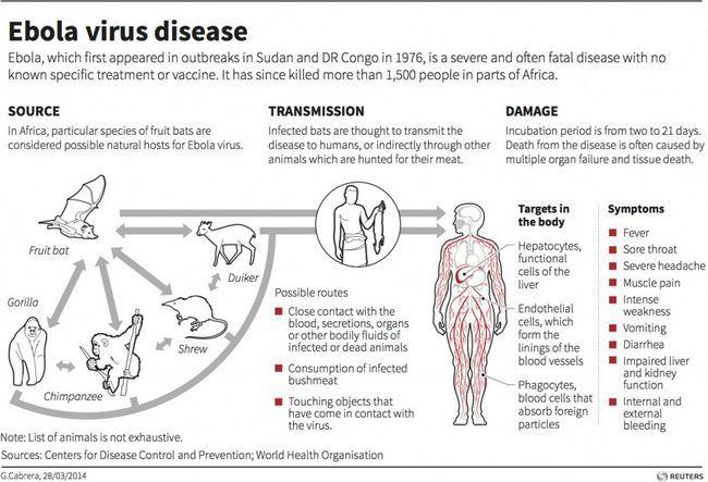 As causas Ebola