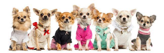 roupas coloridas para animais de estimação