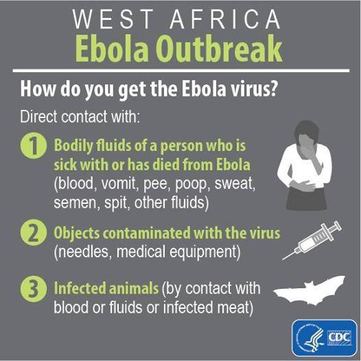 A transmissão do vírus Ebola