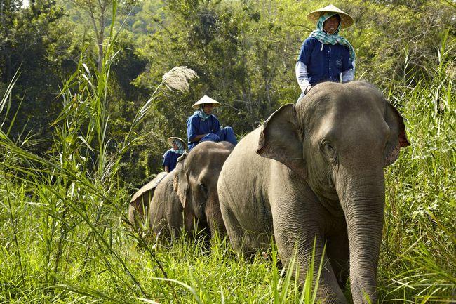 Quando seu período de férias é para cuidar de si mesmo e elefantes