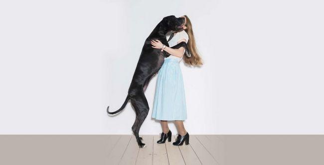 Pet raciocina um cachorro grande