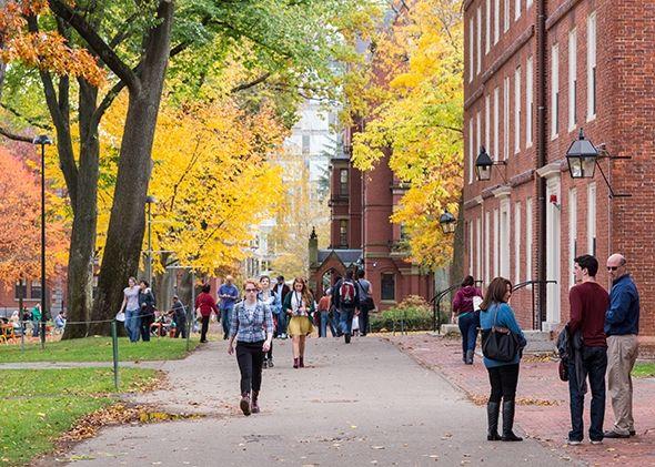O mito da Ivy League