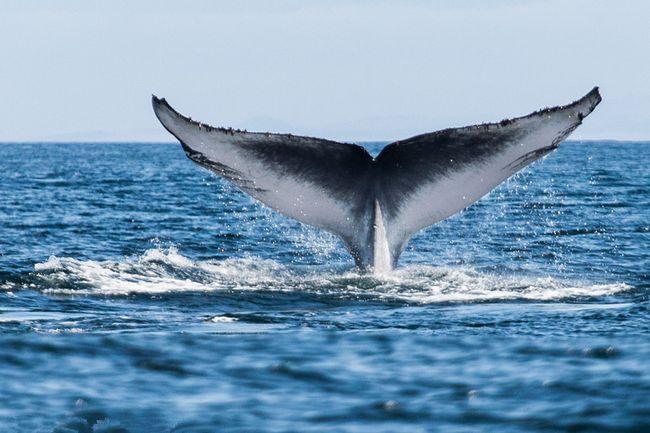 Tipos de baleias