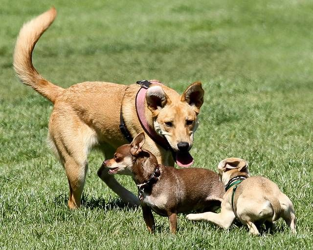 Maneiras de ajudar o seu cão e jogar paisagem bem juntos