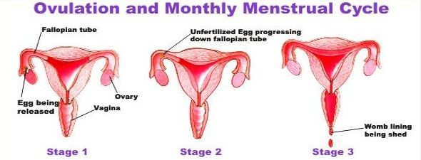 Por que as meninas têm períodos